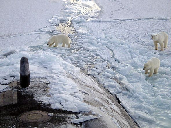 640px-polar_bears_near_north_pole